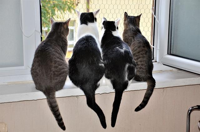 kočky v okně