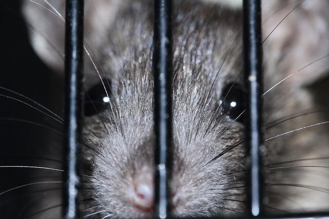 myš za mřížemi