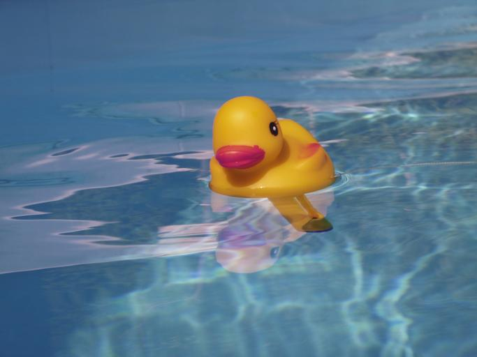 bazénový teploměr – kachnička